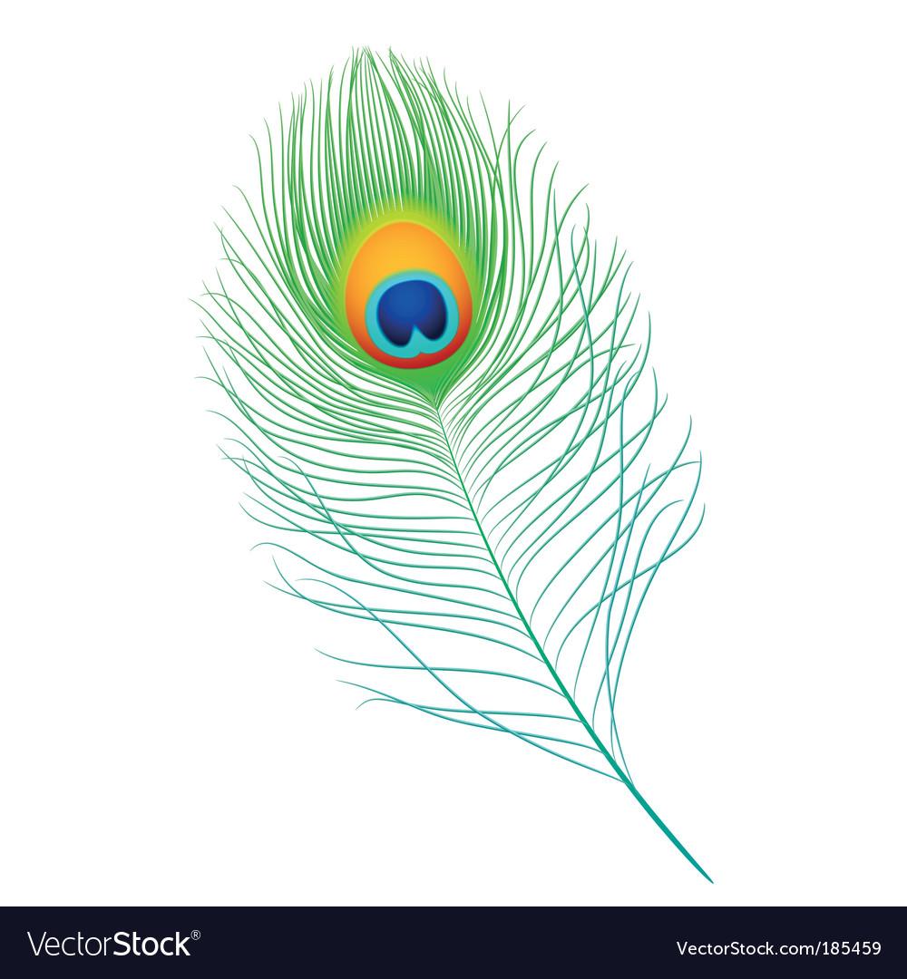 peacock feather royalty free vector image vectorstock vectorstock