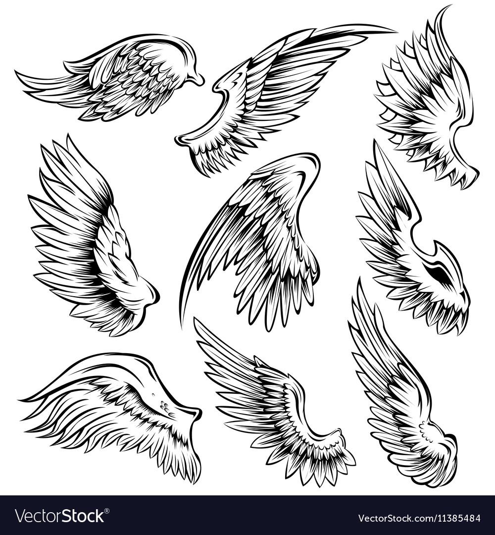 Bird Wings Black White Set vector image