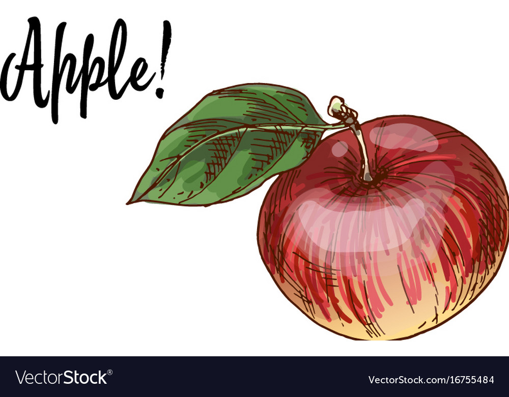 Ripe delicious red apples with green leaf