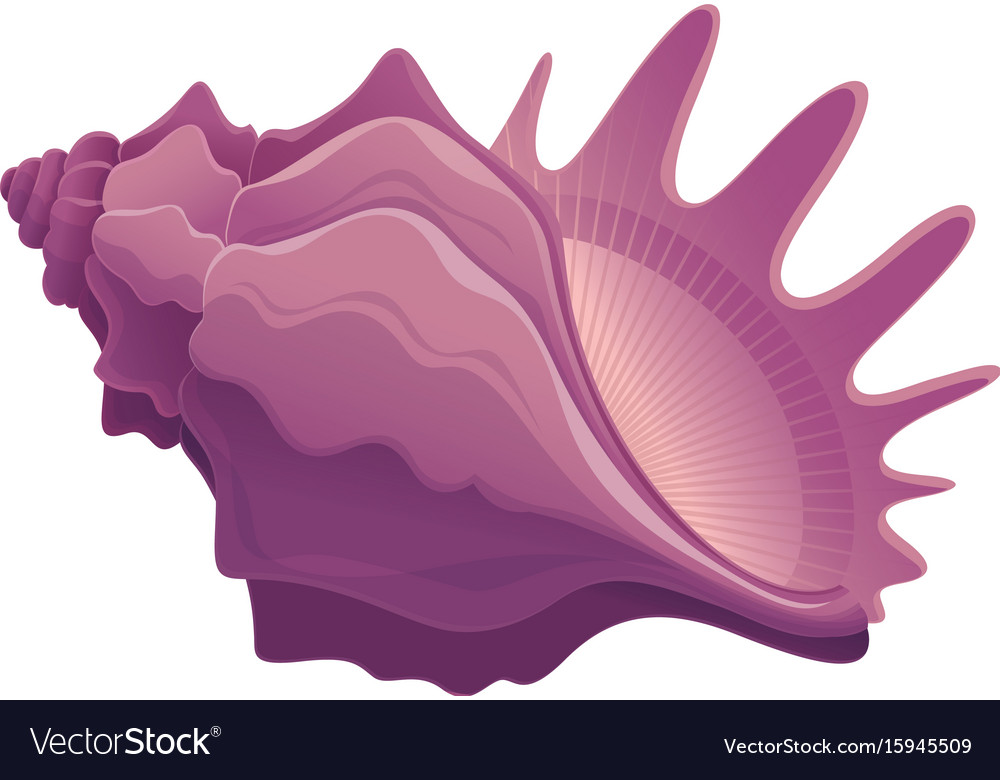Colorful cute seashell vector image