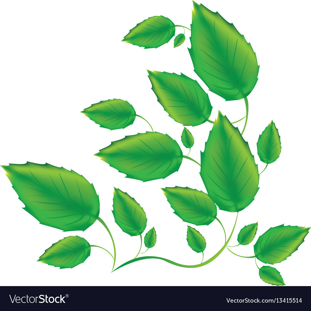 Color branches with leaves icon