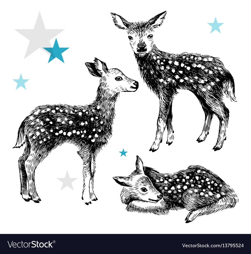 3 hand drawn baby deers in vintage style