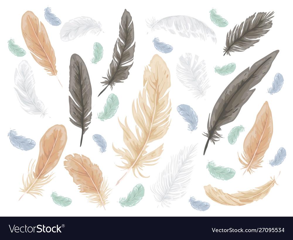 Feather bird isolated set