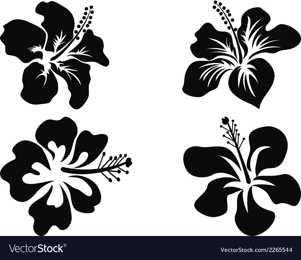 Hibiscus silhouettes vector image