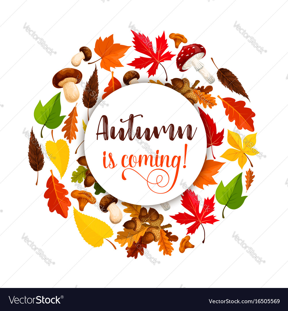 Autumn poster of maple leaf fall vector image