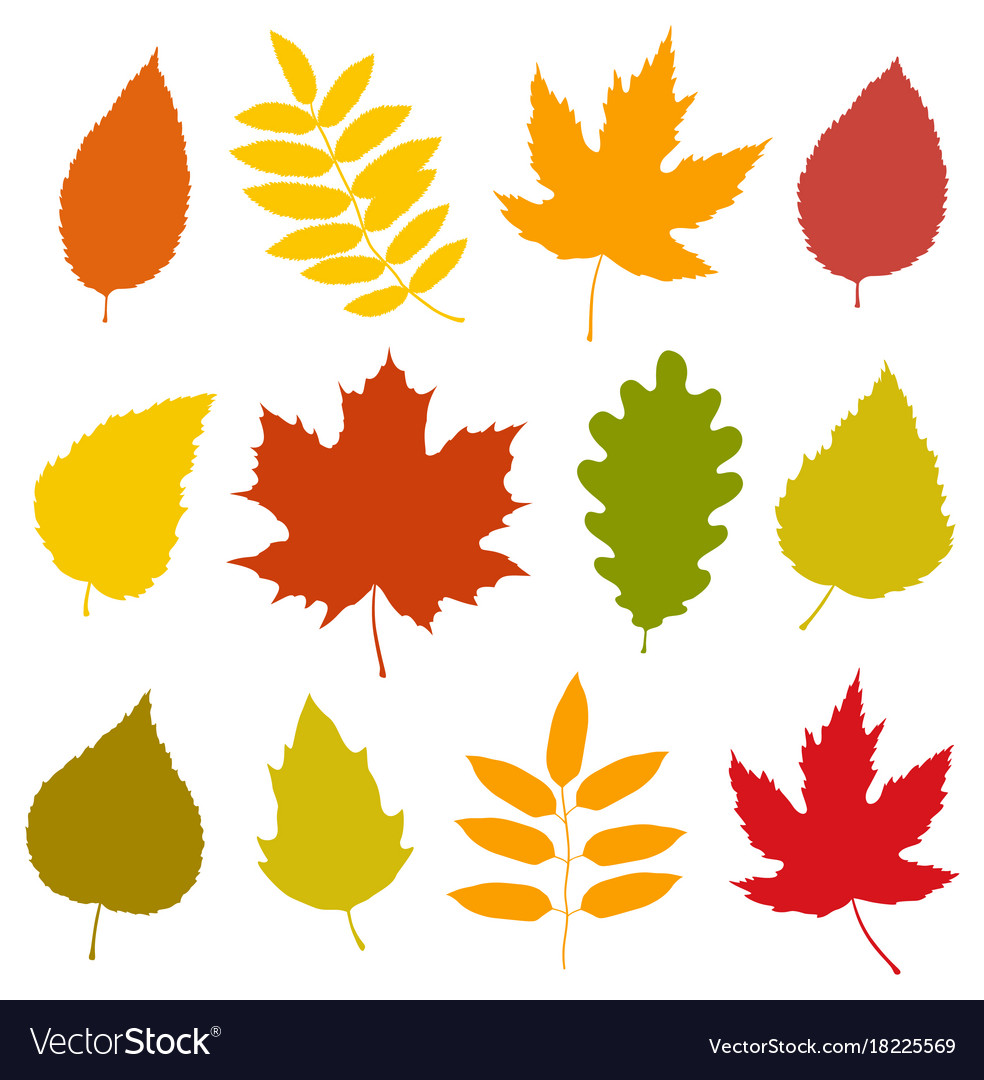 Set Of Isolated Colorful Autumn Leaves Silhouettes