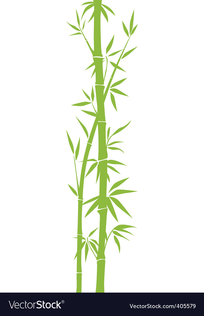 bamboo royalty free vector image vectorstock rh vectorstock com bamboo vector free bamboo vector png