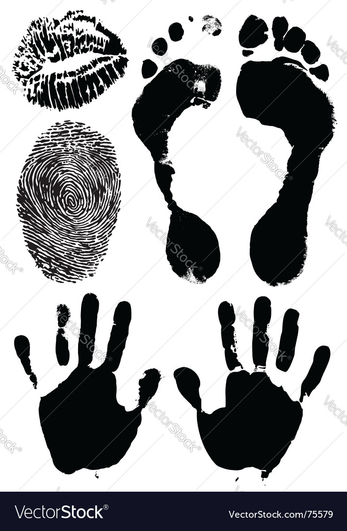 Human hands feet lips vector image