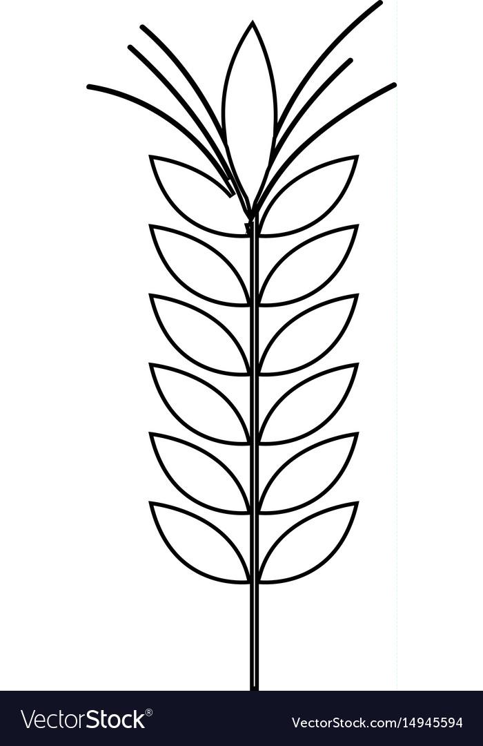 Silhouette healthy wheat organ plant nutricious