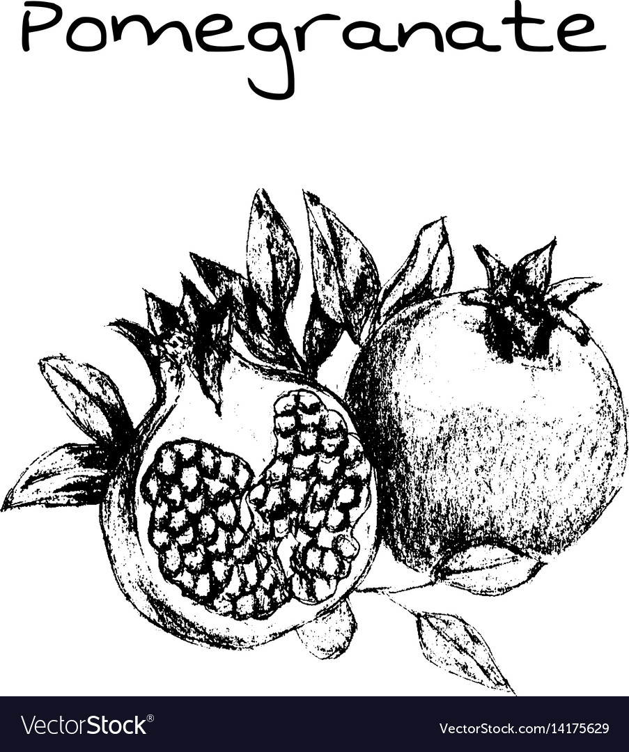 Hand drawn vintage isolated pomegranate