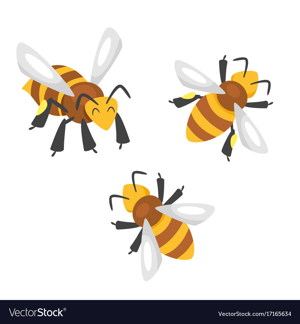 Cartoon style bees vector image