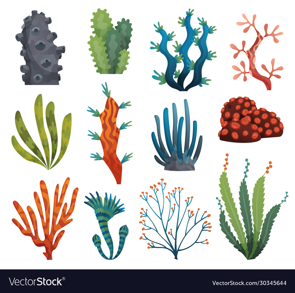 Set watercolor seaweed and corals isolated on
