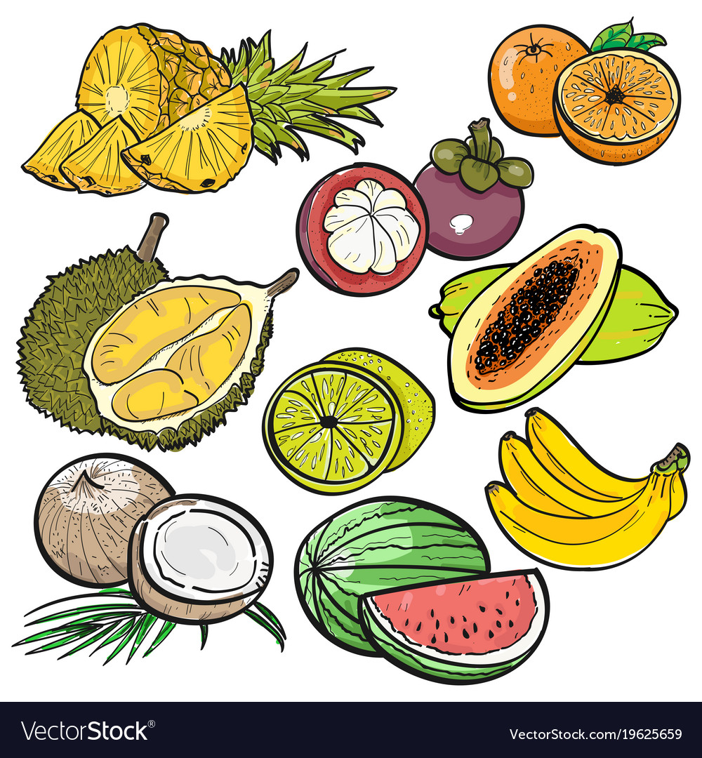 Set Of Color Doodle Tropical Fruit Vector Image