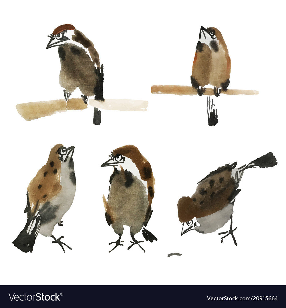 Isolated sparrows painted in chinese technique