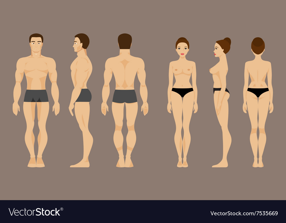 Anatomy of man and woman Royalty Free Vector Image