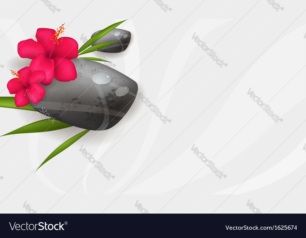 Hibiscus spa banner vector image