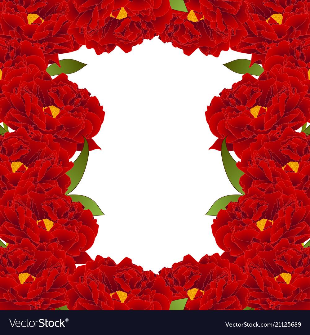 Red peony flower border
