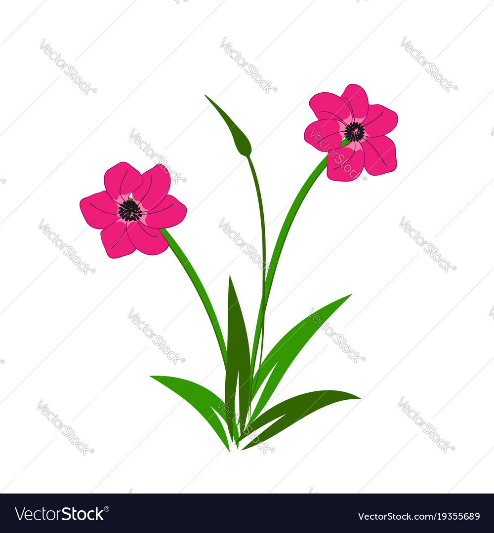 Wild Pink Flowers Bouquet Royalty Free Vector Image