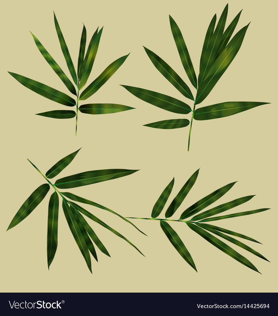 Bamboo leaf set vector image
