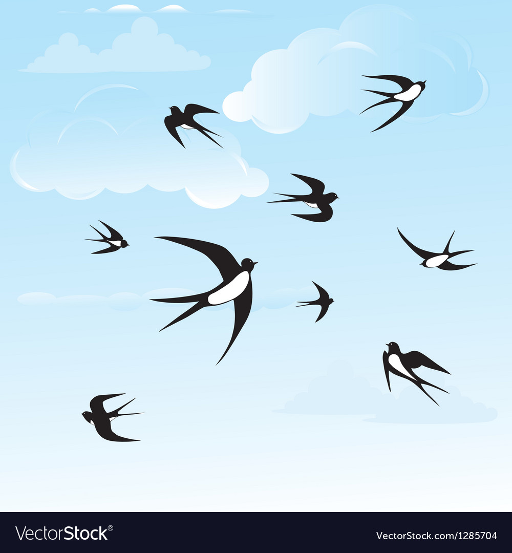 Bird swallow in sky vector image