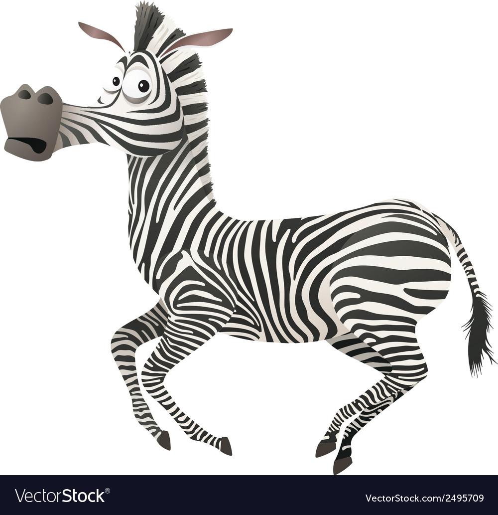 Zebra fun