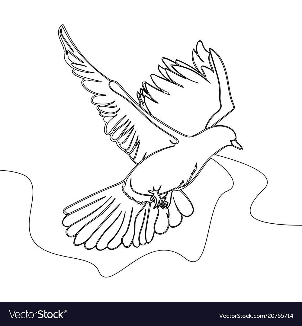 Continuous one line drawing flying pigeon vector image