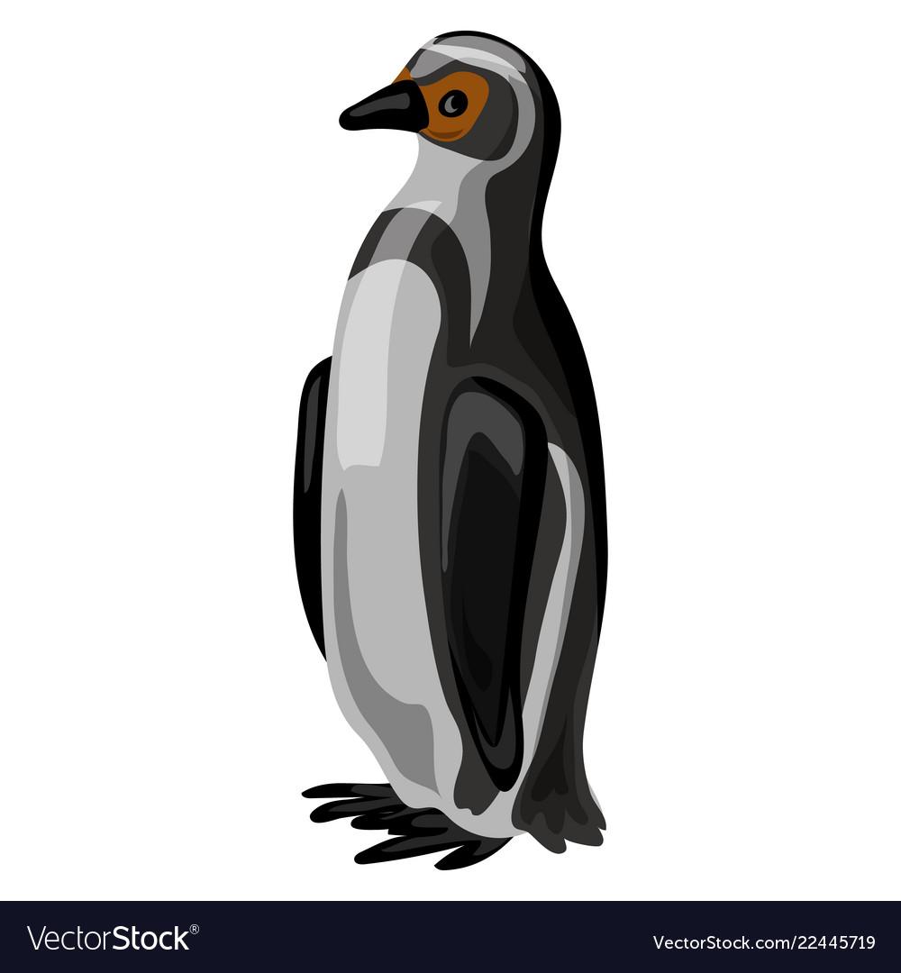 Penguin icon cartoon style