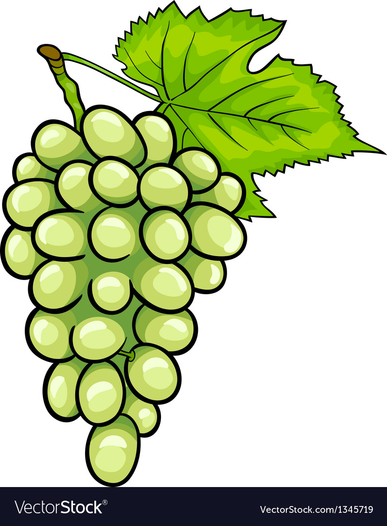 White grapes fruit cartoon Royalty Free Vector Image