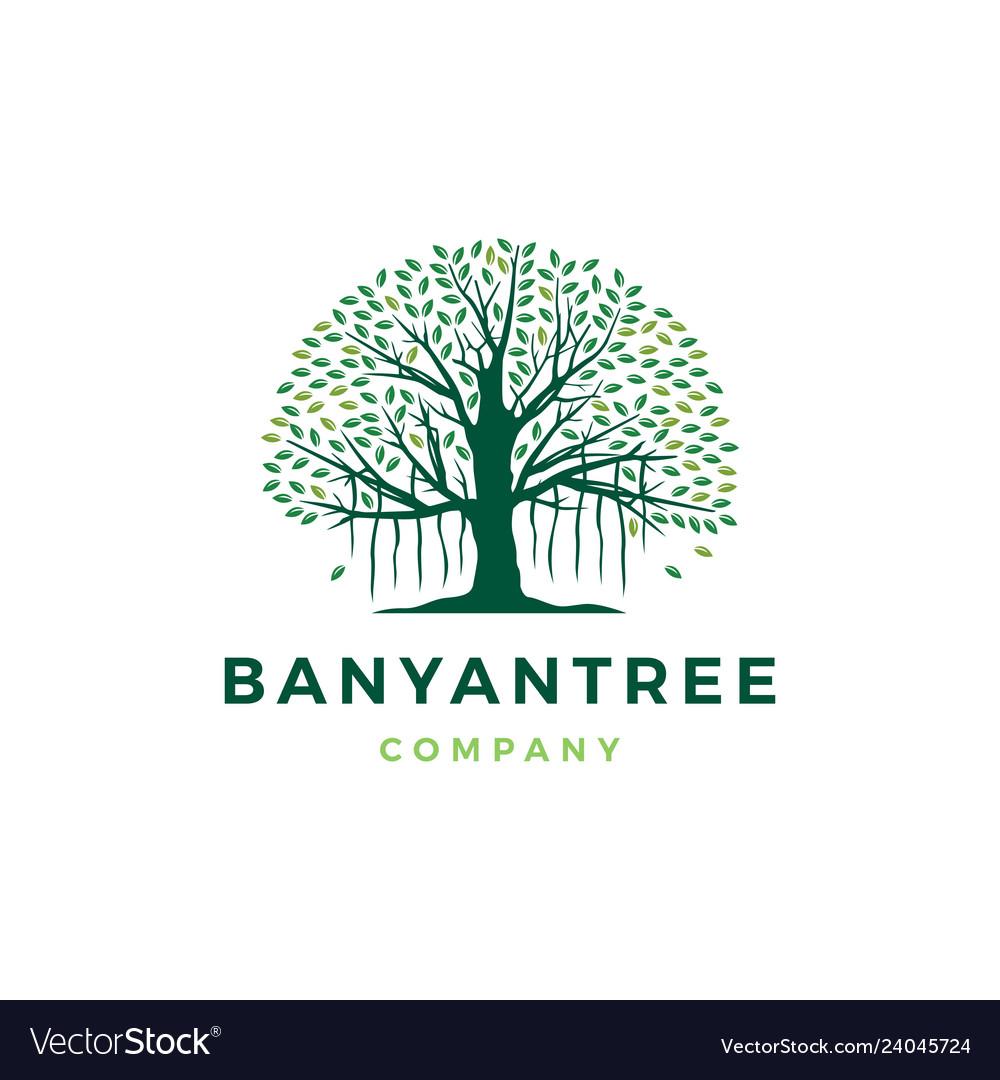 Banyan Tree Logo Icon Royalty Free Vector Image