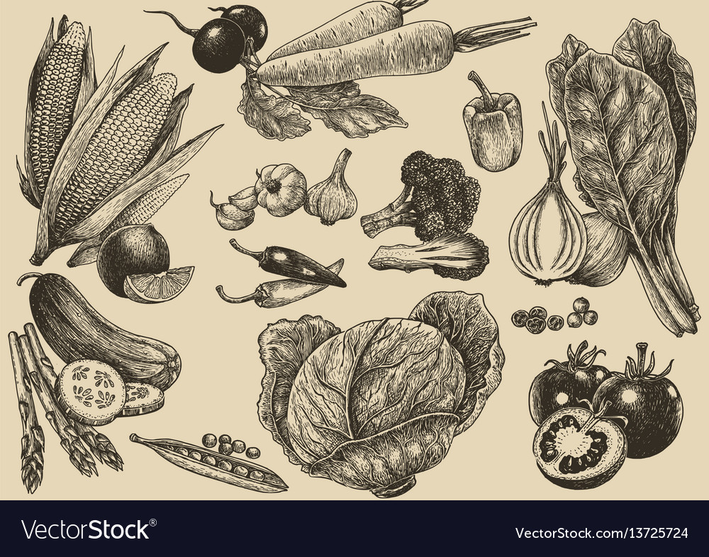 Vegetable set hand drawinghealthy fresh food vector image