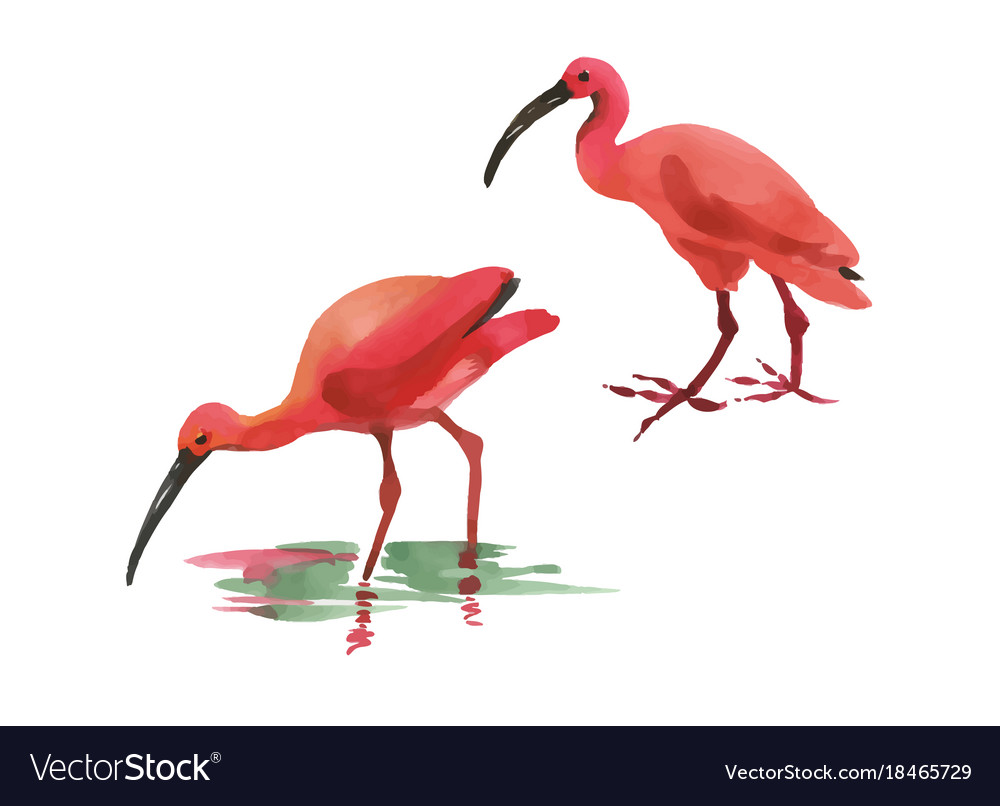 Watercolor two flamingo hand painted pink bird