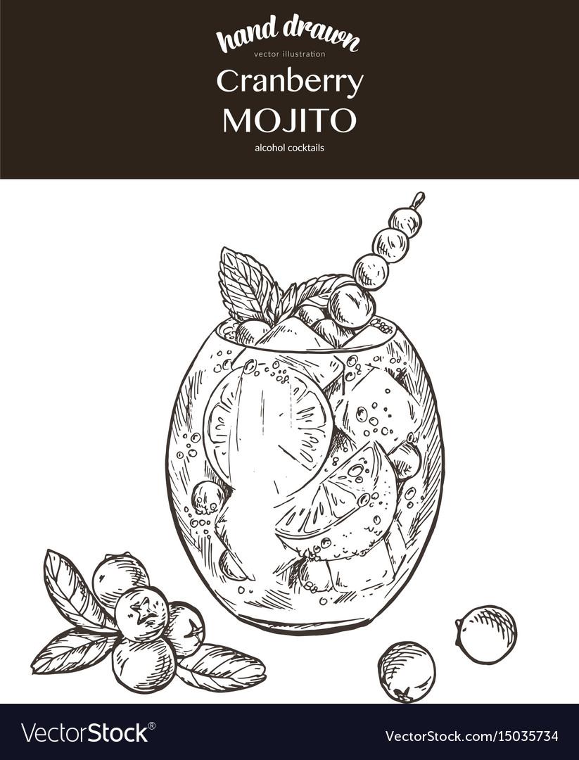 Cranberry mojito sketch vector image