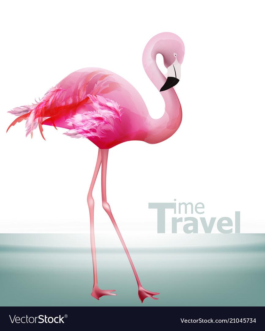 Flamingo card beautiful pink bird on blue