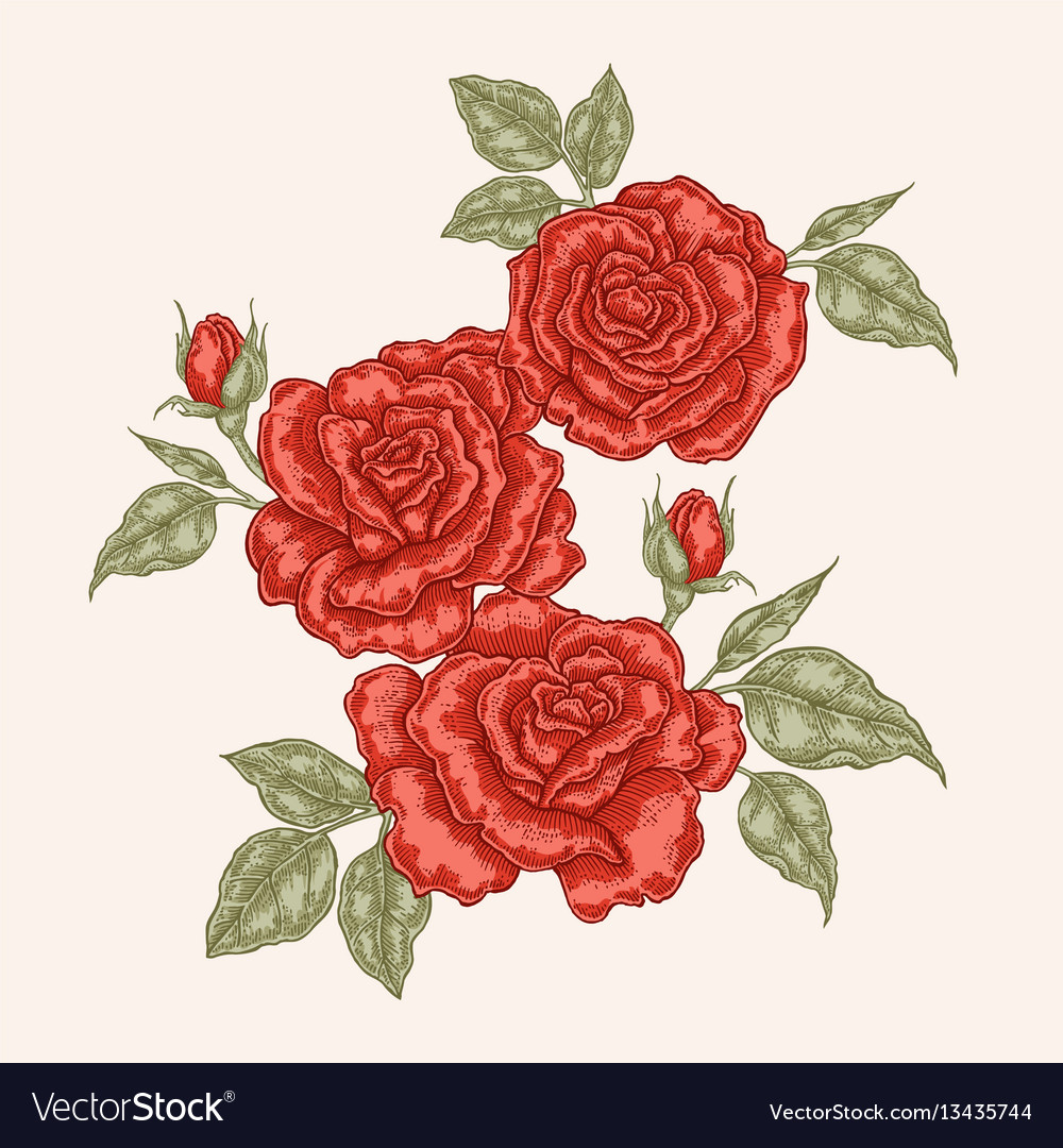 Red rose flowers and leaves in vintage style hand