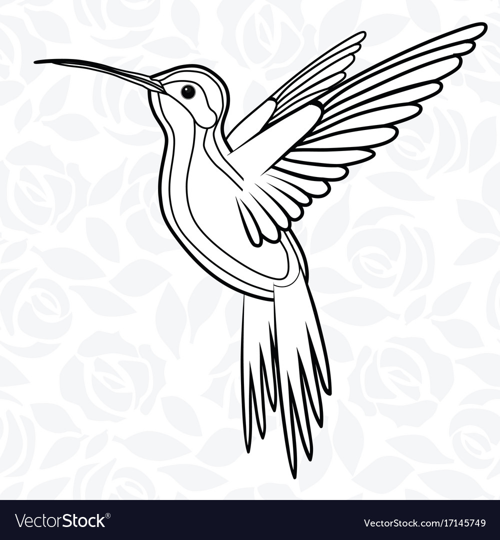 Colibri or hummingbirds for logo icon t-shirt vector image