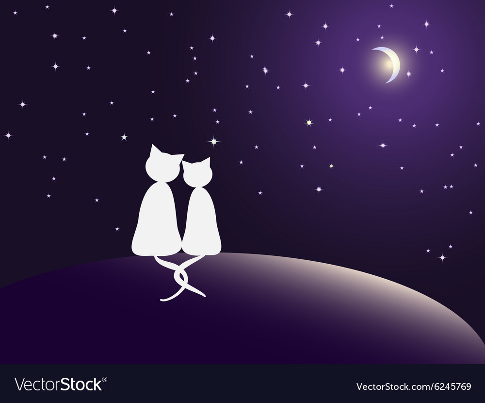 Couple of cats watching stars