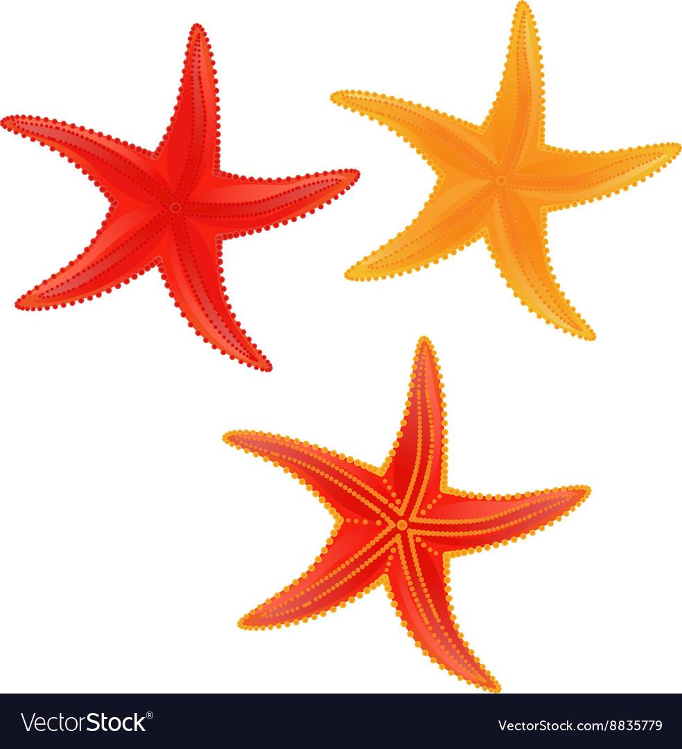 sea star royalty free vector image vectorstock