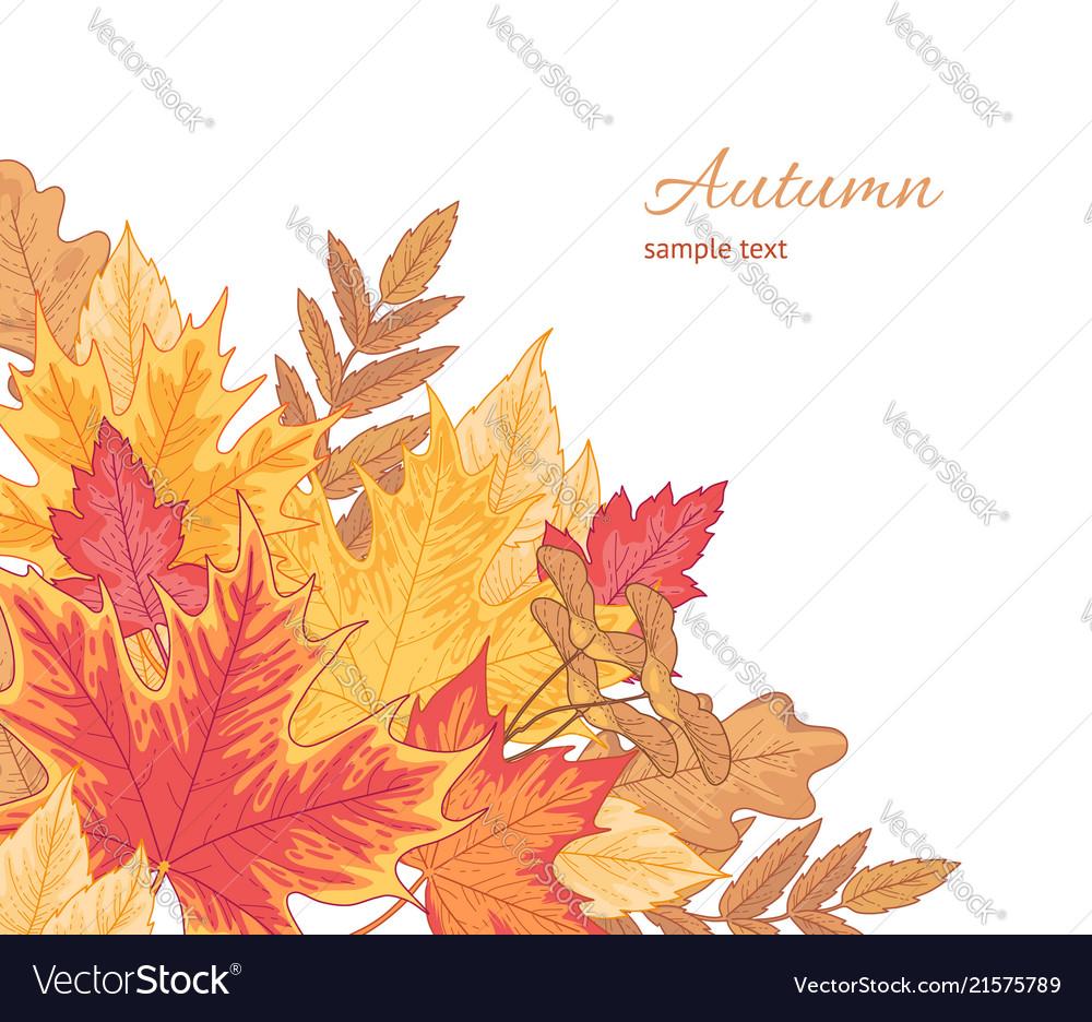 Multicolor fallen leaves
