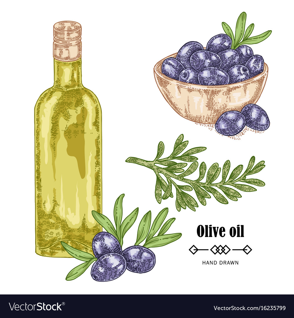 Hand drawn black olive branch and olive oil in