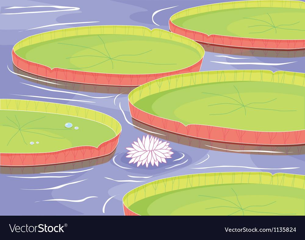 Lotus Flower In Pond Royalty Free Vector Image