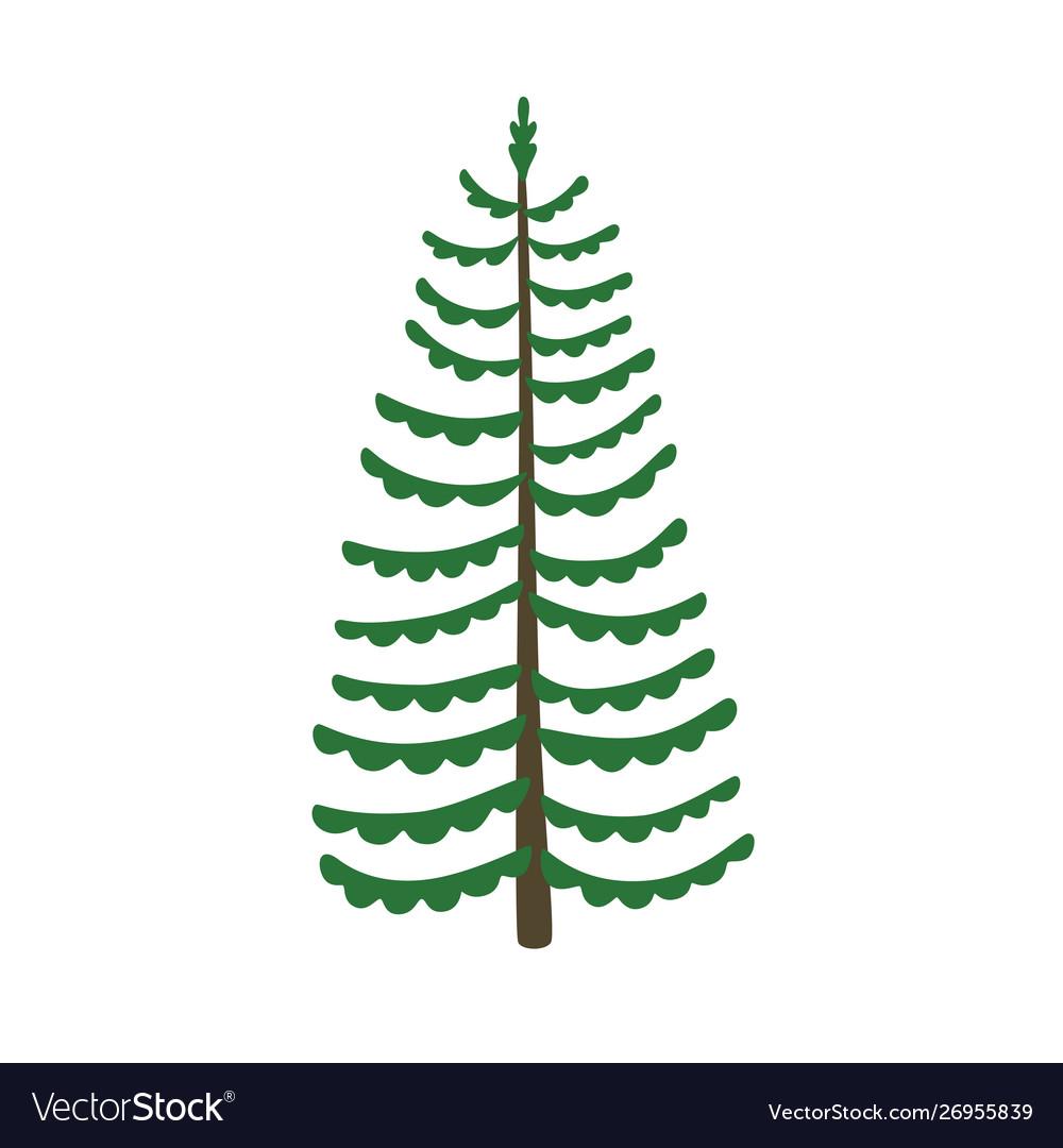Green xmas tree isolated on white tree