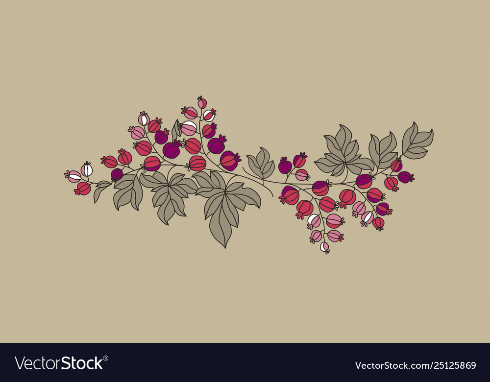 Currant berries branch outline