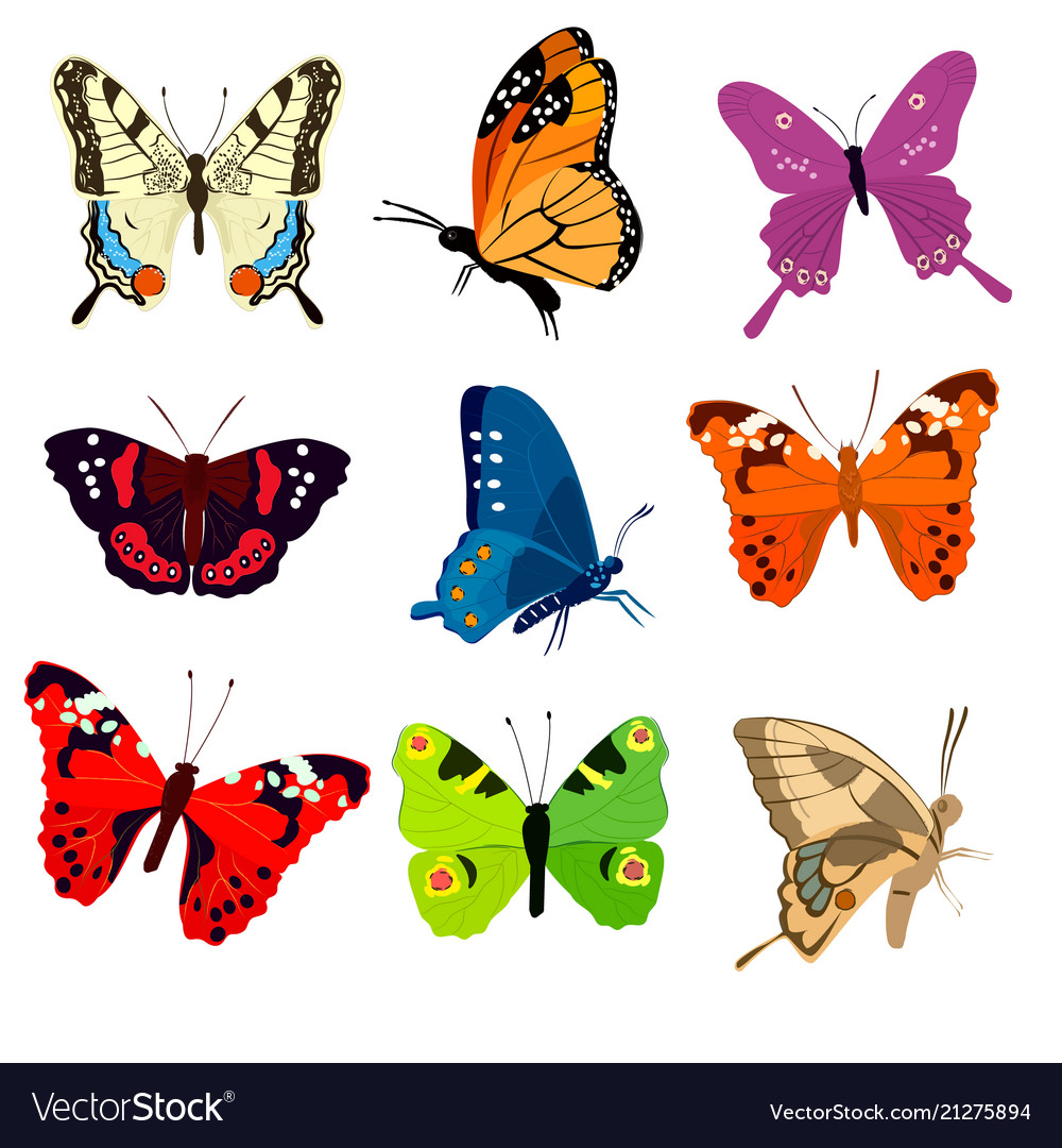 Cute colorful butterflies