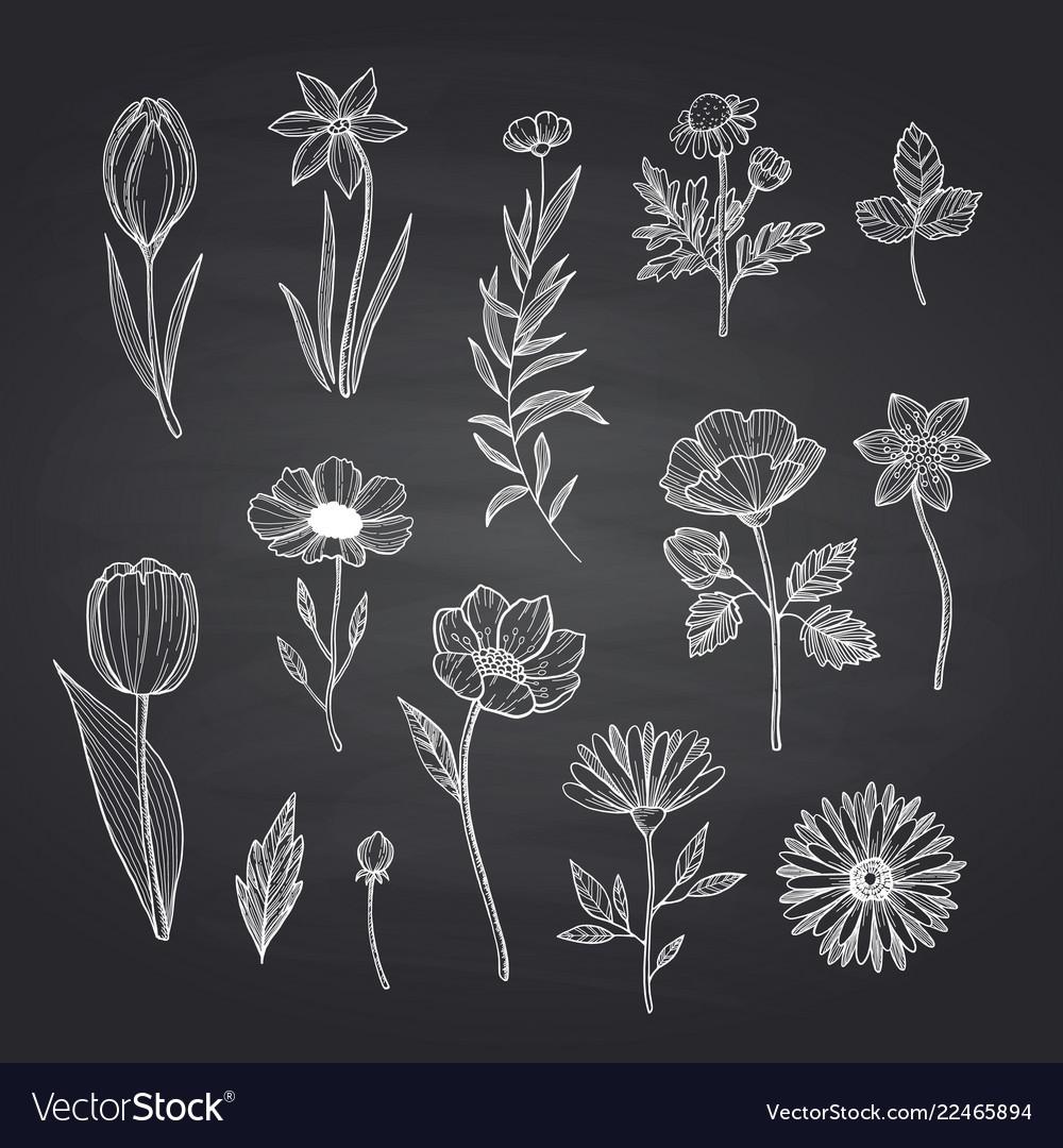 Hand drawn flowers set on black chalkboard