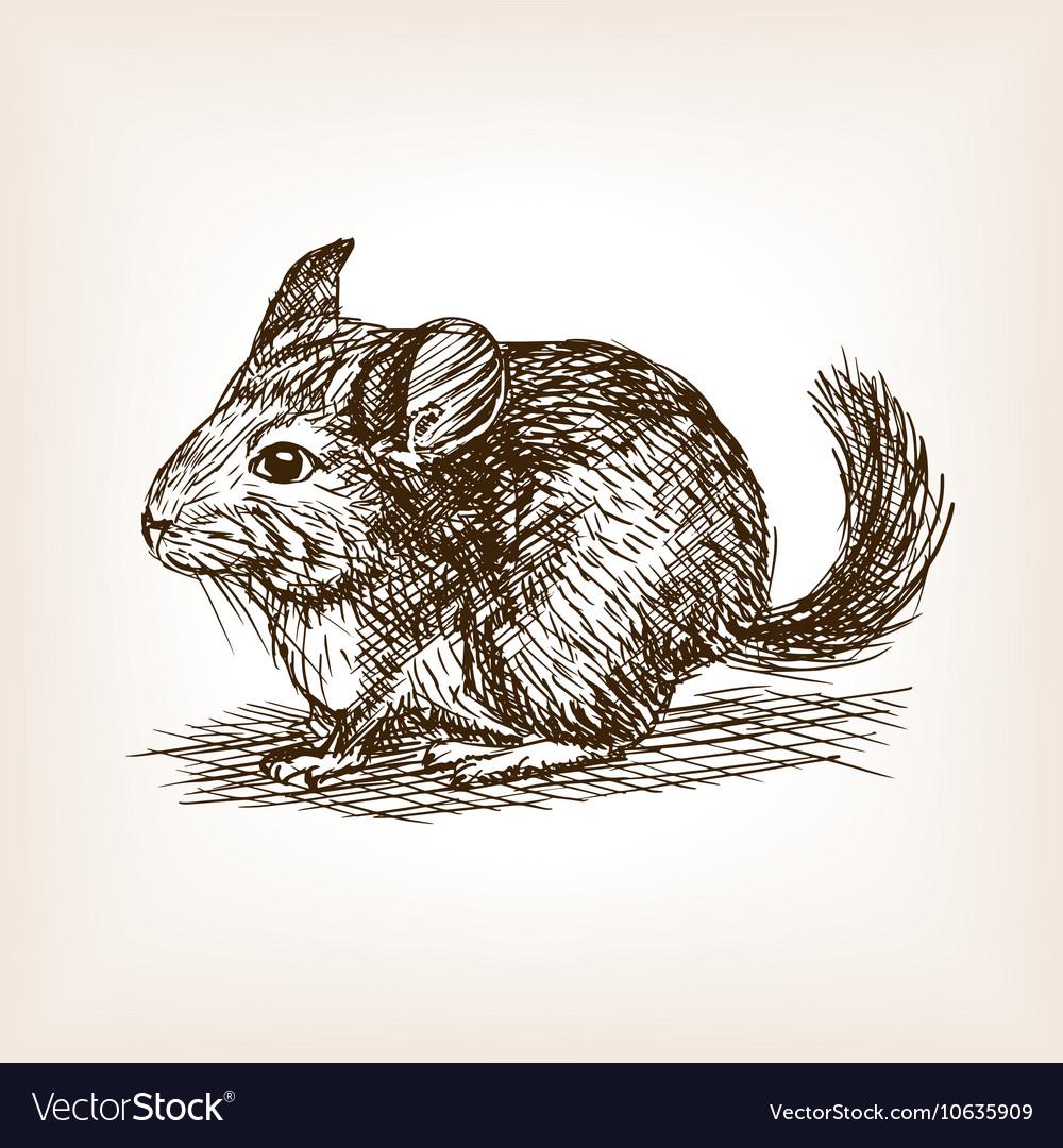 Chinchilla dog sketch vector image