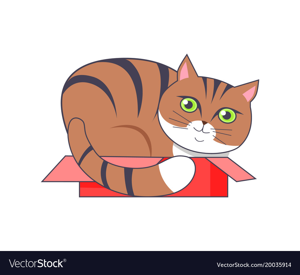 Cat sitting in box red color