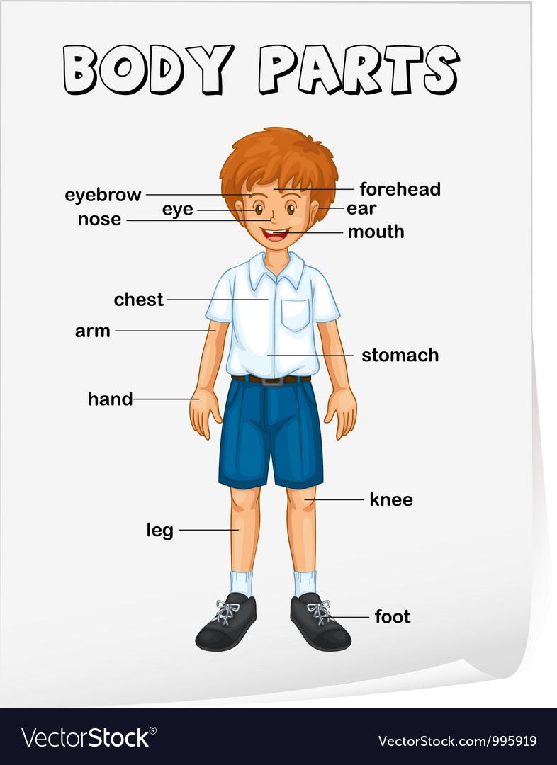 Body Parts Diagram Poster Vector Art