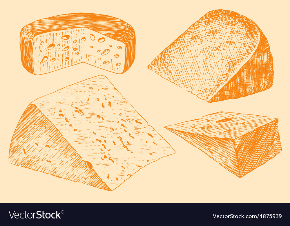 Cheese Set Engraving Hand Drawn Vintage vector image