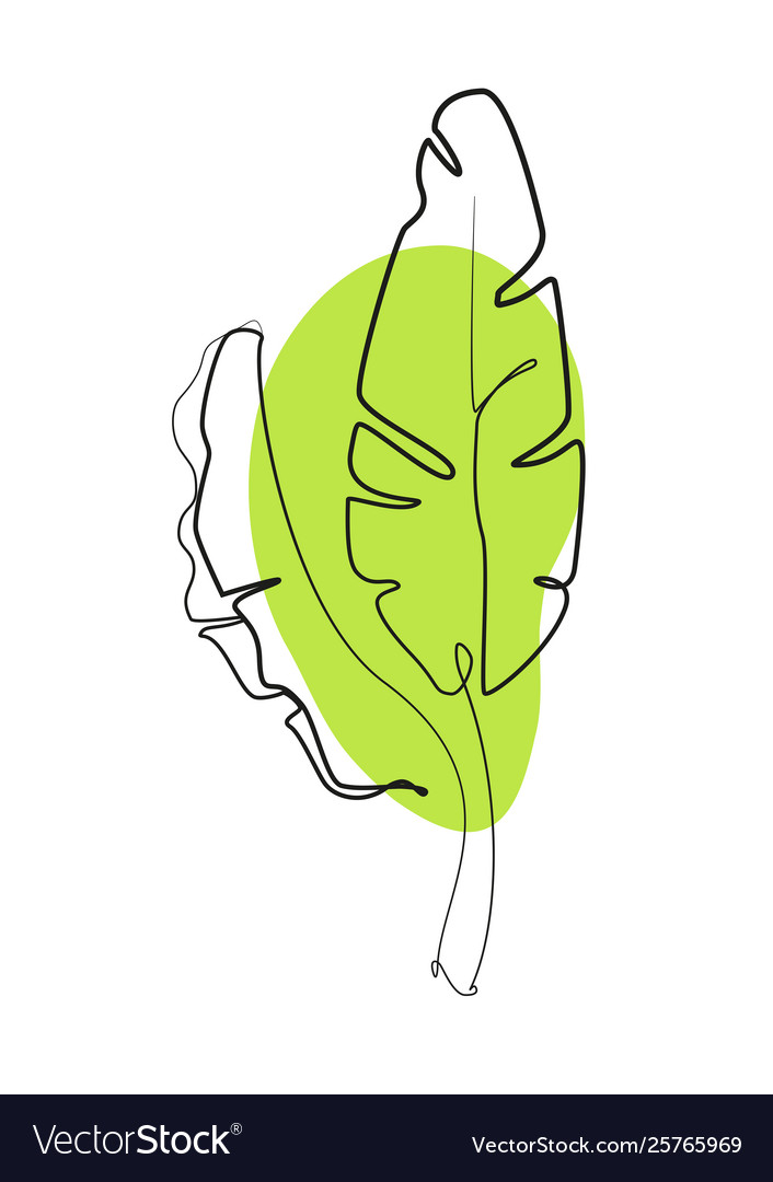 One line drawing contour drawing banana leaves