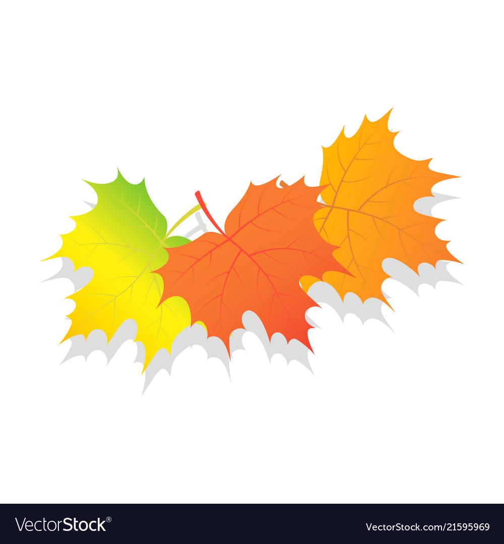 Set of autumn leaves icon isometric style
